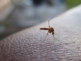 Was gegen Mücken hilft