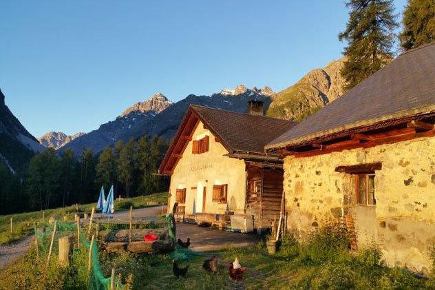 Die Alp Laisch (GR) der Familie Nesa.