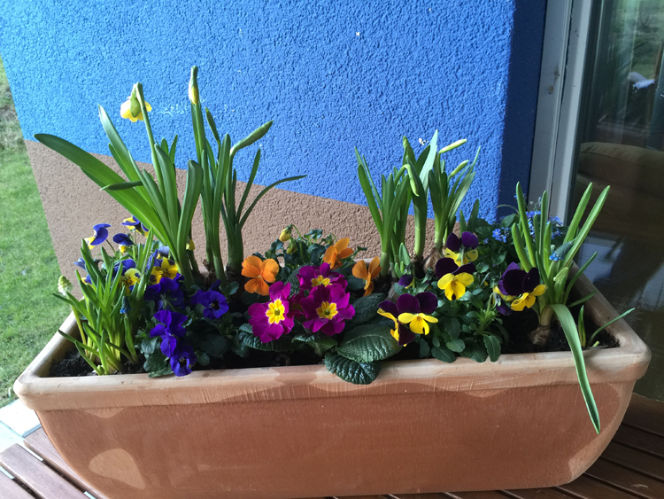 Frühlings-Blumenkasten