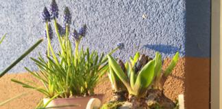 Frühlings-Blumenkasten bepflanzen