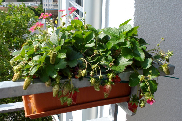rasen auf balkon pflanzen carprola for. Black Bedroom Furniture Sets. Home Design Ideas