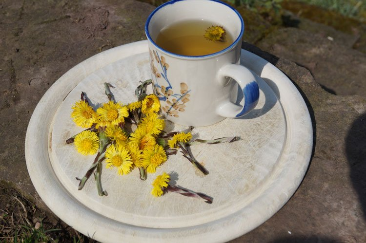 Huflattich als Tee - neben dem Tee kann man auch Fertigpräparate und den Frischpflanzenpresssaft nutzen.