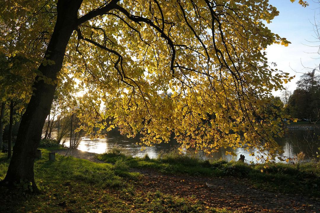 Bäume bei der Sommersonnenwende