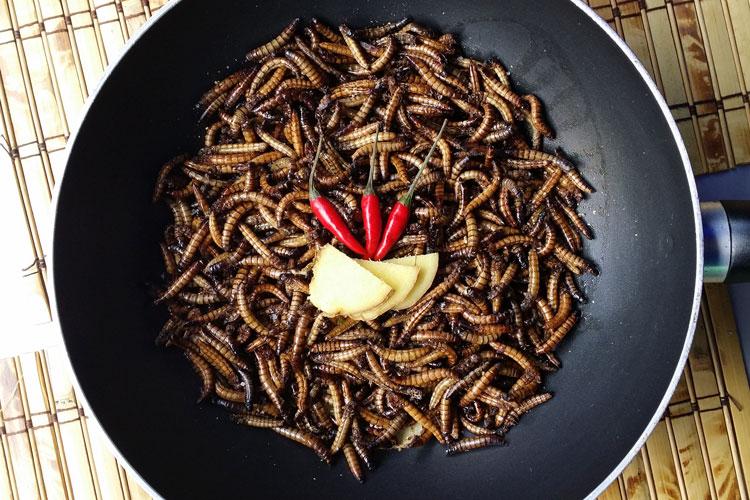 Sind Insekten-Gerichte ein neuer Trend?