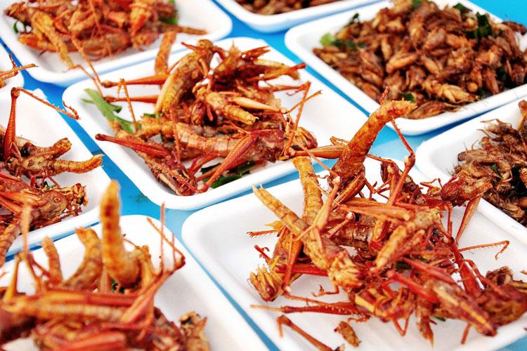 Insektengerichte sind gewöhnungsbedürftig