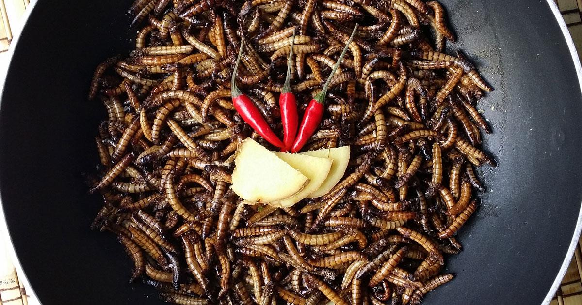 insekten gerichte exotischer genuss oder kulinarischer alptraum. Black Bedroom Furniture Sets. Home Design Ideas