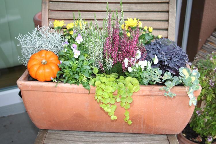 der winter kommt bestimmt herbstblumenkasten bepflanzen. Black Bedroom Furniture Sets. Home Design Ideas