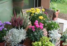 Pflanzenauswahl für den Herbstblumenkasten