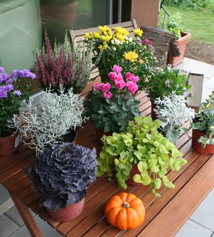 Der winter kommt bestimmt herbstblumenkasten bepflanzen for Balkonpflanzen winter
