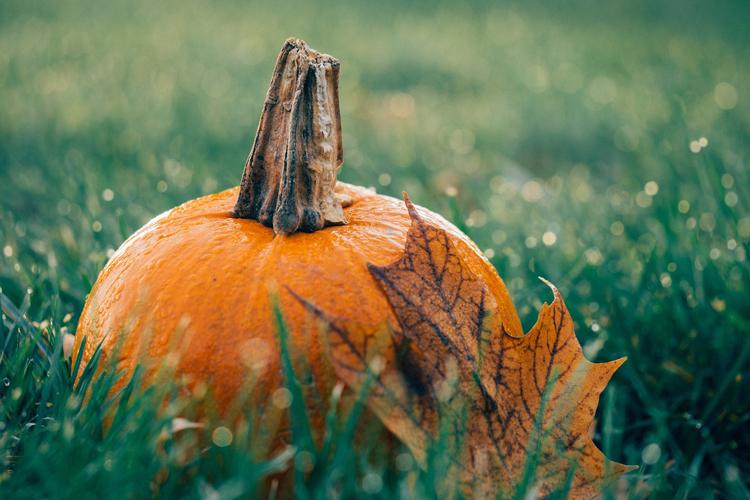 Kürbis für den Herbstblumenkasten