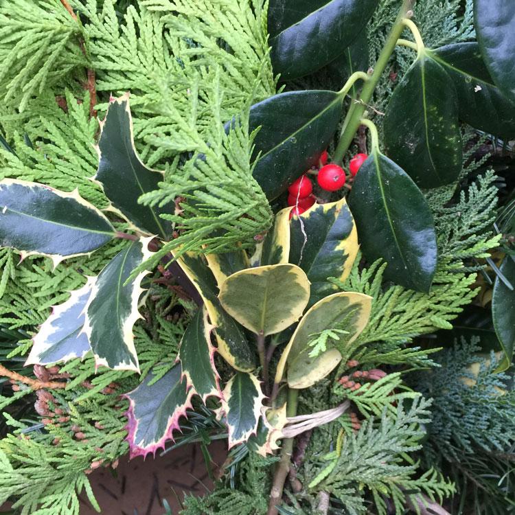 Verschiedene Zweige aus Nadelhölzer im Weihnachtsgesteck