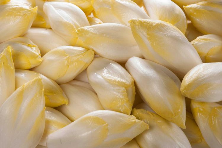 Chicorée ist gesund und vitaminreich