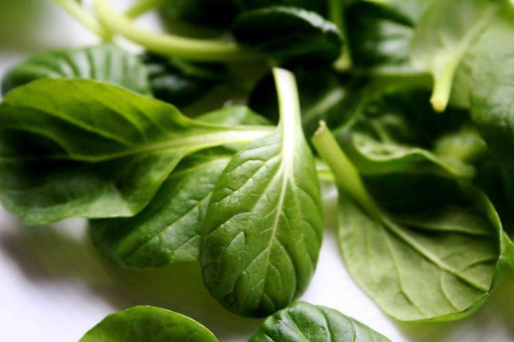 Oriental Green - die Liebhaber-Salatmischung