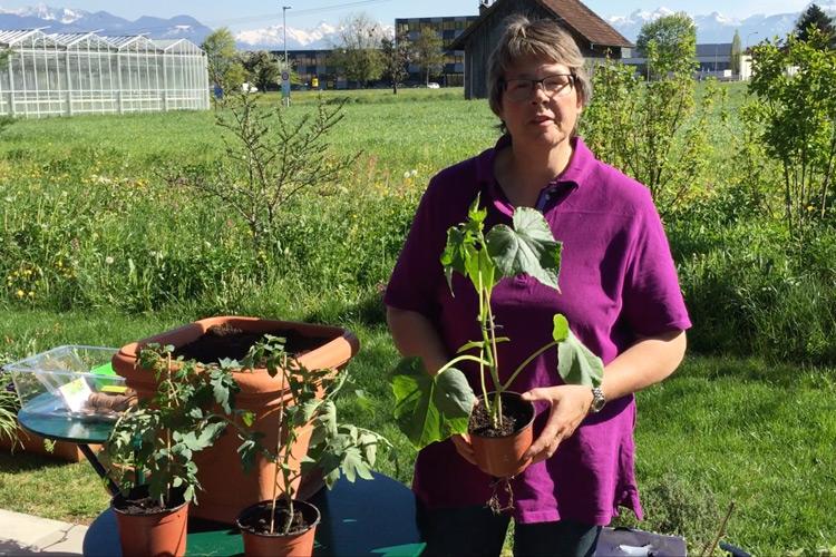 Gemüsepflanzen veredeln mit Andrea Rothenberger