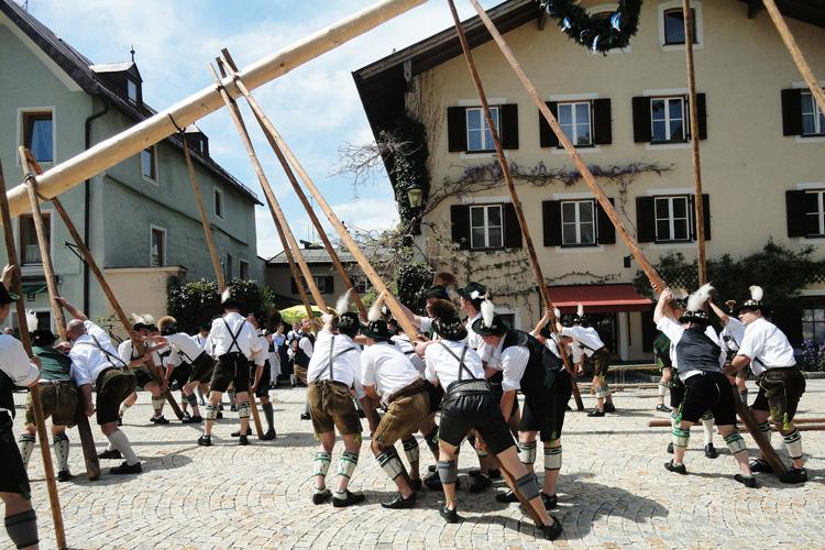Birke als Maibaum in Bayern