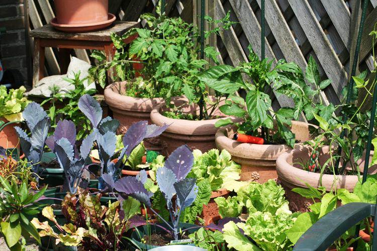 Gemüsepflanzen in Töpfen