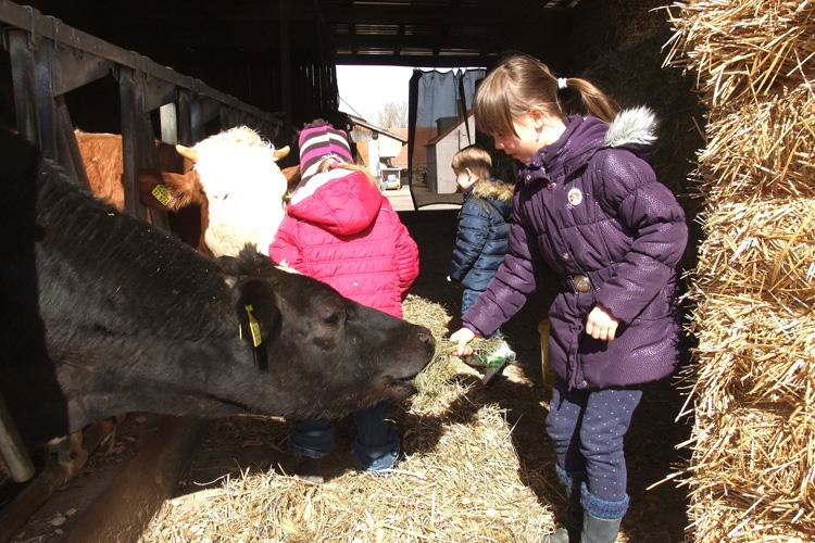 Kinder auf dem Bauernhof sind gesünder als Stadtkinder