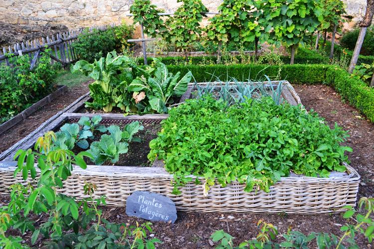 Veredelte Gemüsepflanzen