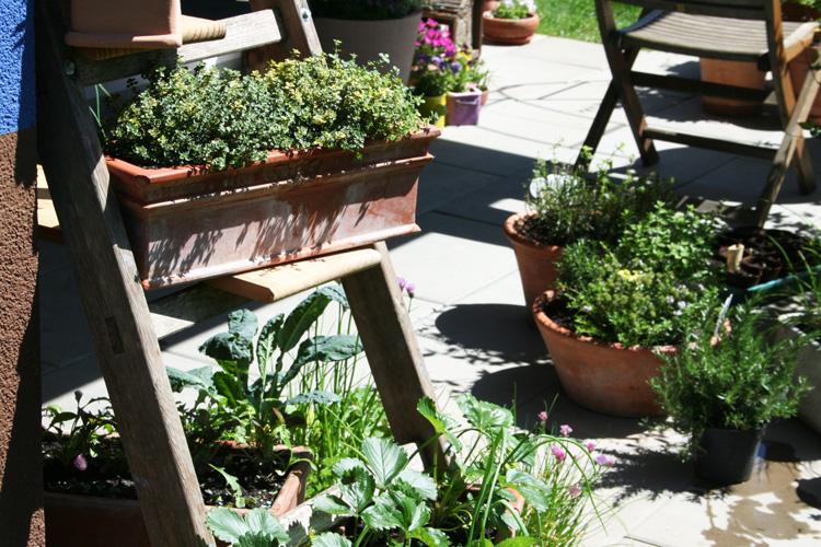 Zitronenthymian mit anderen Pflanzen auf dem Pflanzenregal
