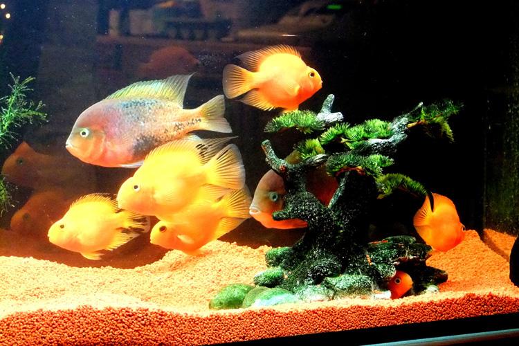 Aquarium mit Zierfischen