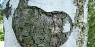 Die Birke – Symbol des wiedererwachenden Lebens und der Jugendlichkeit
