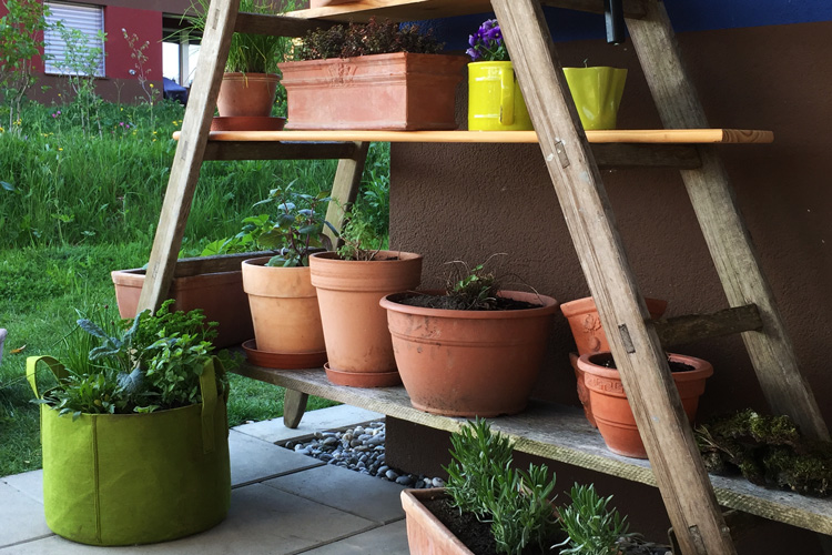 wie aus einer alten holzleiter ein originelles pflanzenregal wird. Black Bedroom Furniture Sets. Home Design Ideas