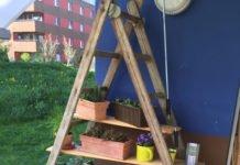 Pfalnzenregal aus Holzleiter