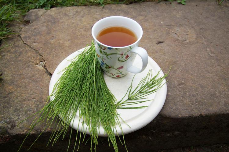 Tee aus Ackerschachtelhalm