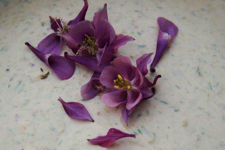 Blüten Ackerschachtelhalm
