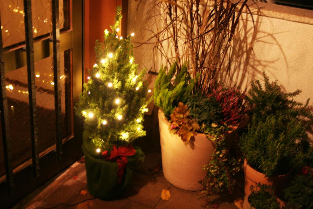 Weihnachtlich dekorierte und beleuchtete Zuckerhutfichte vor dem Hauseingang