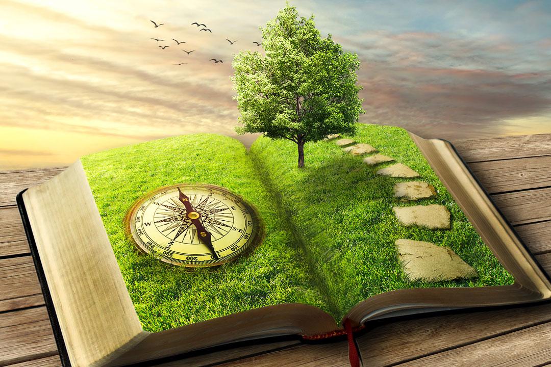 Buch als Wiese mit Kompass und grüner Baum
