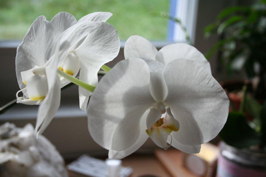 wie sie phalaenopsis orchideen einfach und schnell im korb. Black Bedroom Furniture Sets. Home Design Ideas