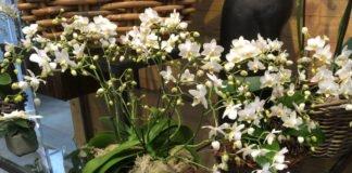 Orchideen im Topf oder Korb arrangieren