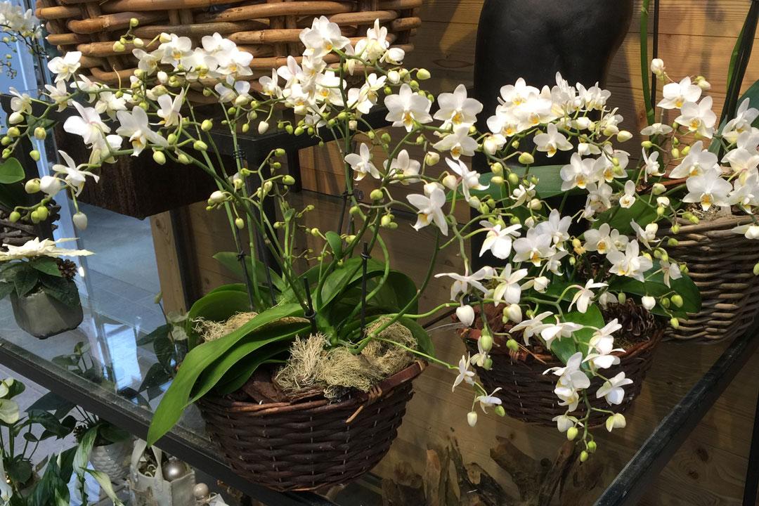 wie sie phalaenopsis orchideen einfach und schnell im korb arrangieren. Black Bedroom Furniture Sets. Home Design Ideas