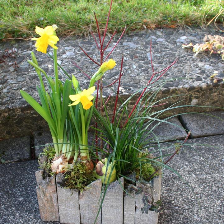 Fertiggestelltes und arrangiertes Frühlingsgesteck
