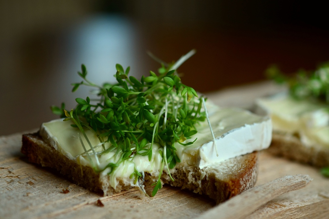 Kresse-Sprossen auf Käsebrot