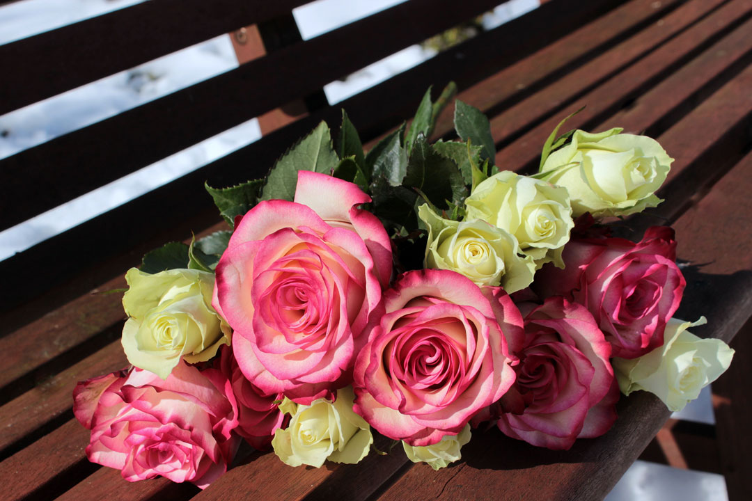 Rosen für den Valentinstag