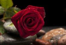 Valentinstag - das Fest der Liebe und Freundschaft