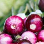 Frische Zwiebel als Heilmittel
