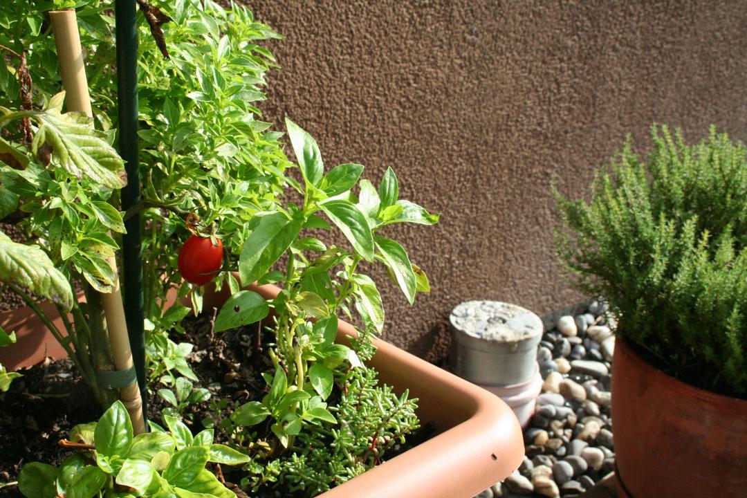 tomaten auf der fensterbank richtig auss en und anziehen. Black Bedroom Furniture Sets. Home Design Ideas