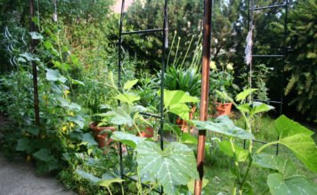 Vertikale Gärten - die moderne Form von Urban Gardening.