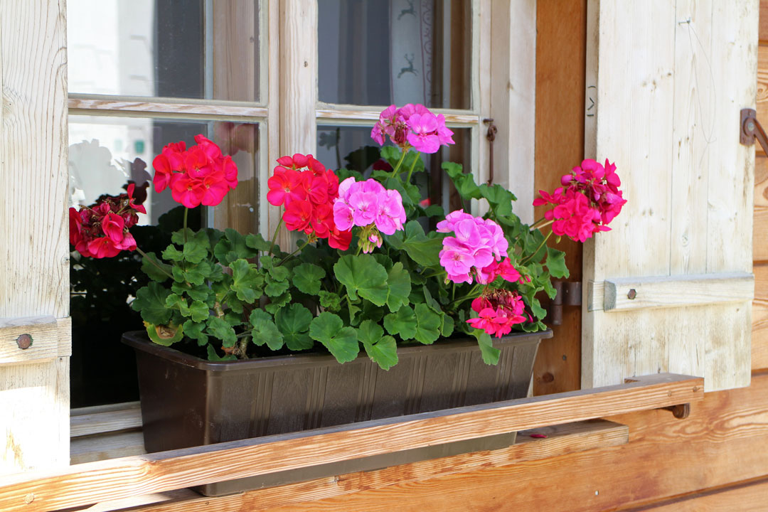 Ein farbenprächtiger Blumenkasten vor dem Fenster ziert jede Hausfassade.