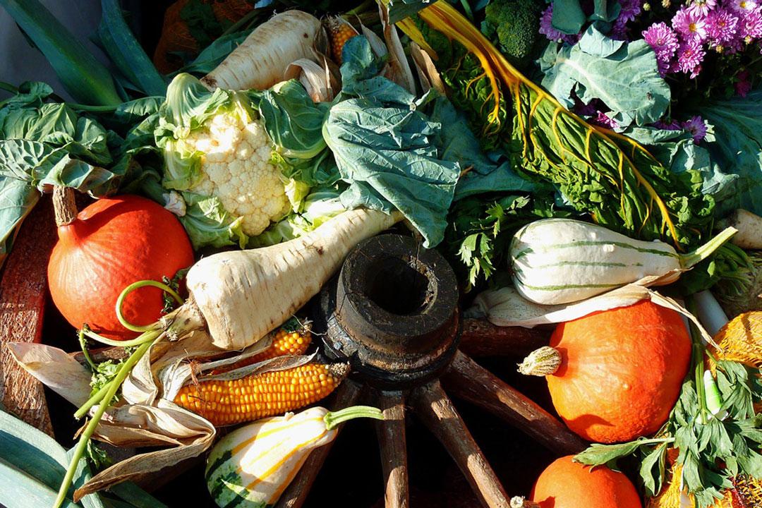 Auswahl von basischen Lebensmitteln im Freien