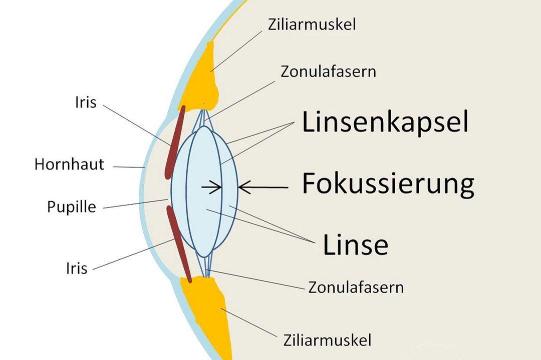 Grafik: Schematischer Aufbau des Auges.