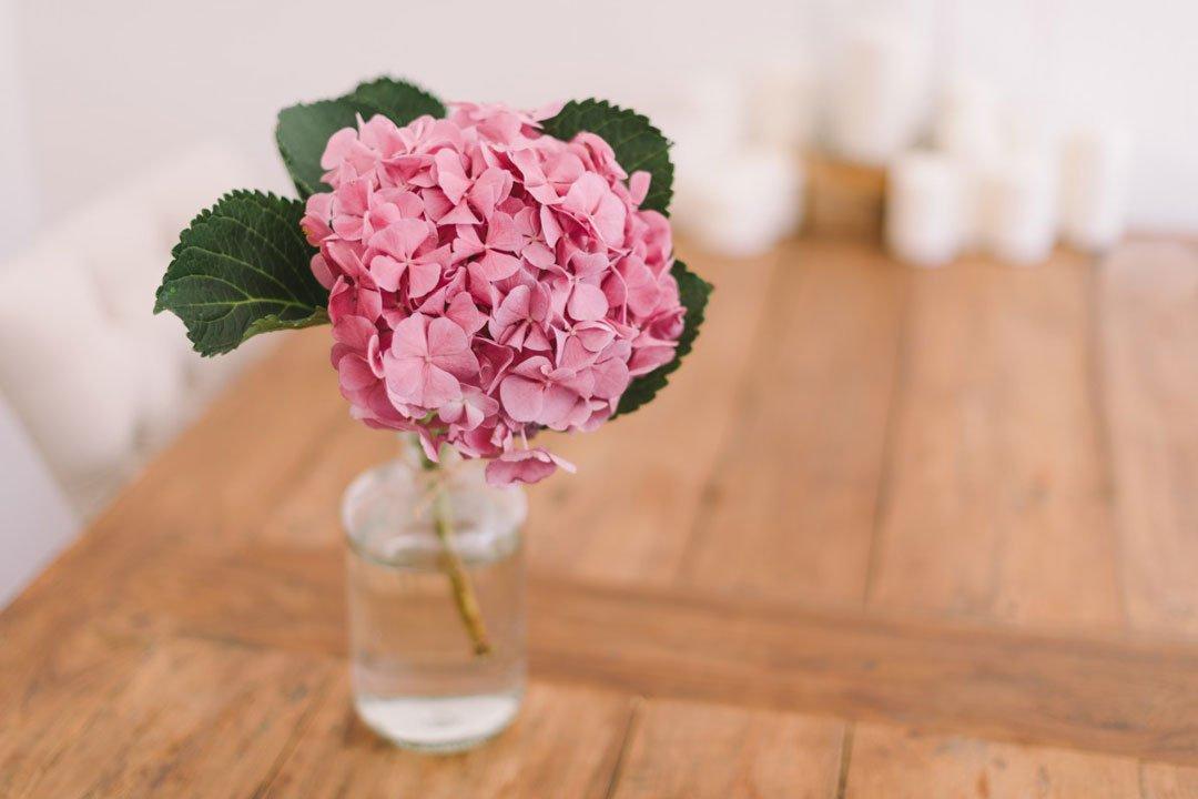 Hortensie als Schnittblume in einer Vase