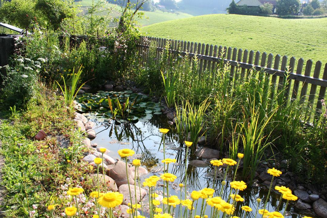 Pflanzenvielfalt im und am Gartenteich