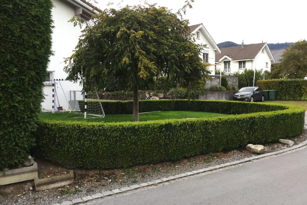 Die Hecke im Garten ist geschnitten