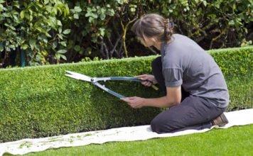 Eine Gärtnerin schneidet die Hecke