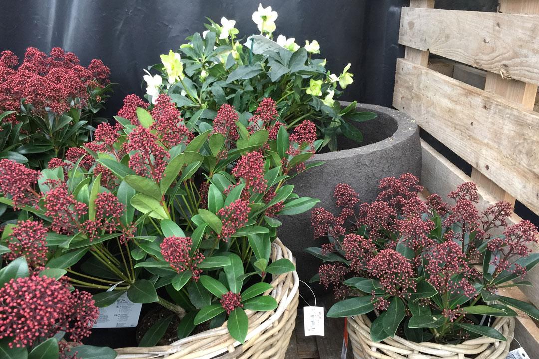 Korb mit verschiedenen Herbstpflanzen