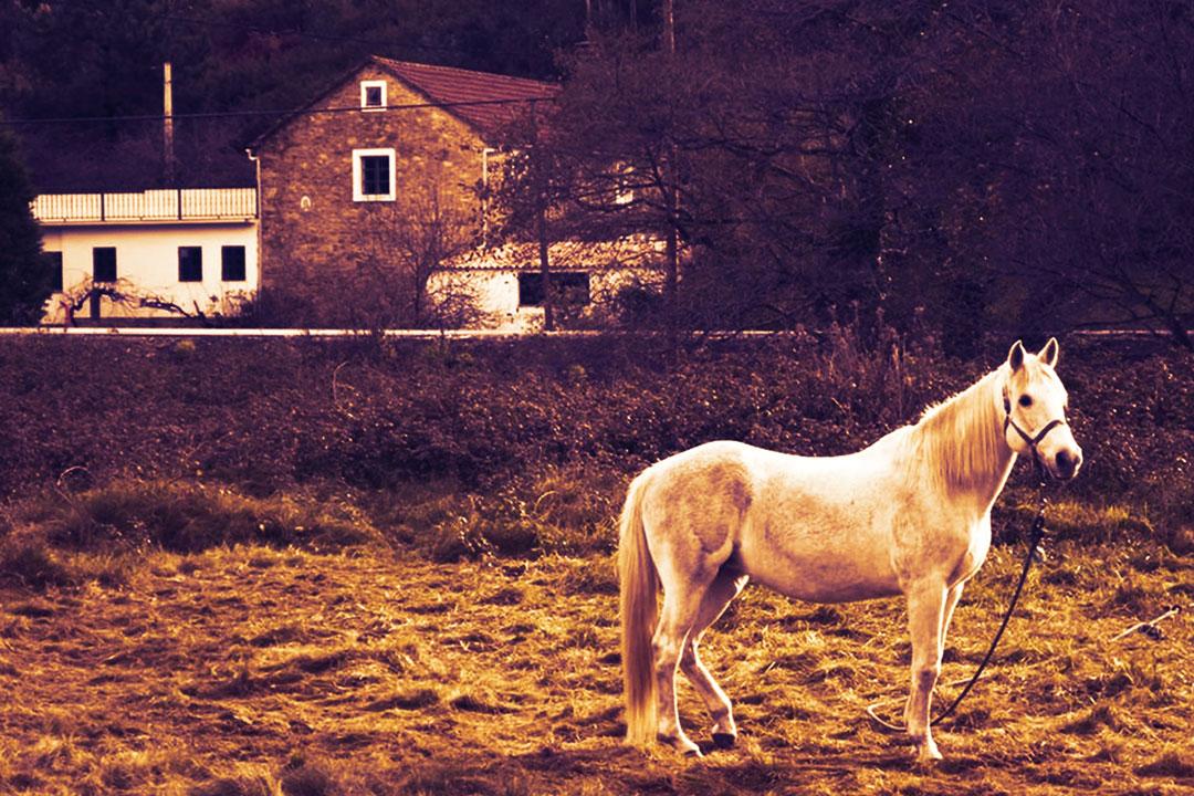 Ein Pferd auf der Wiese ohne eigenen Stall kann das Leben verändern